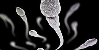 Есть ли шанс забеременеть при олигозооспермии?