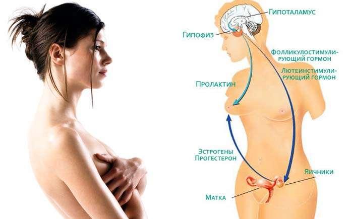пролактин при беременности на ранних сроках